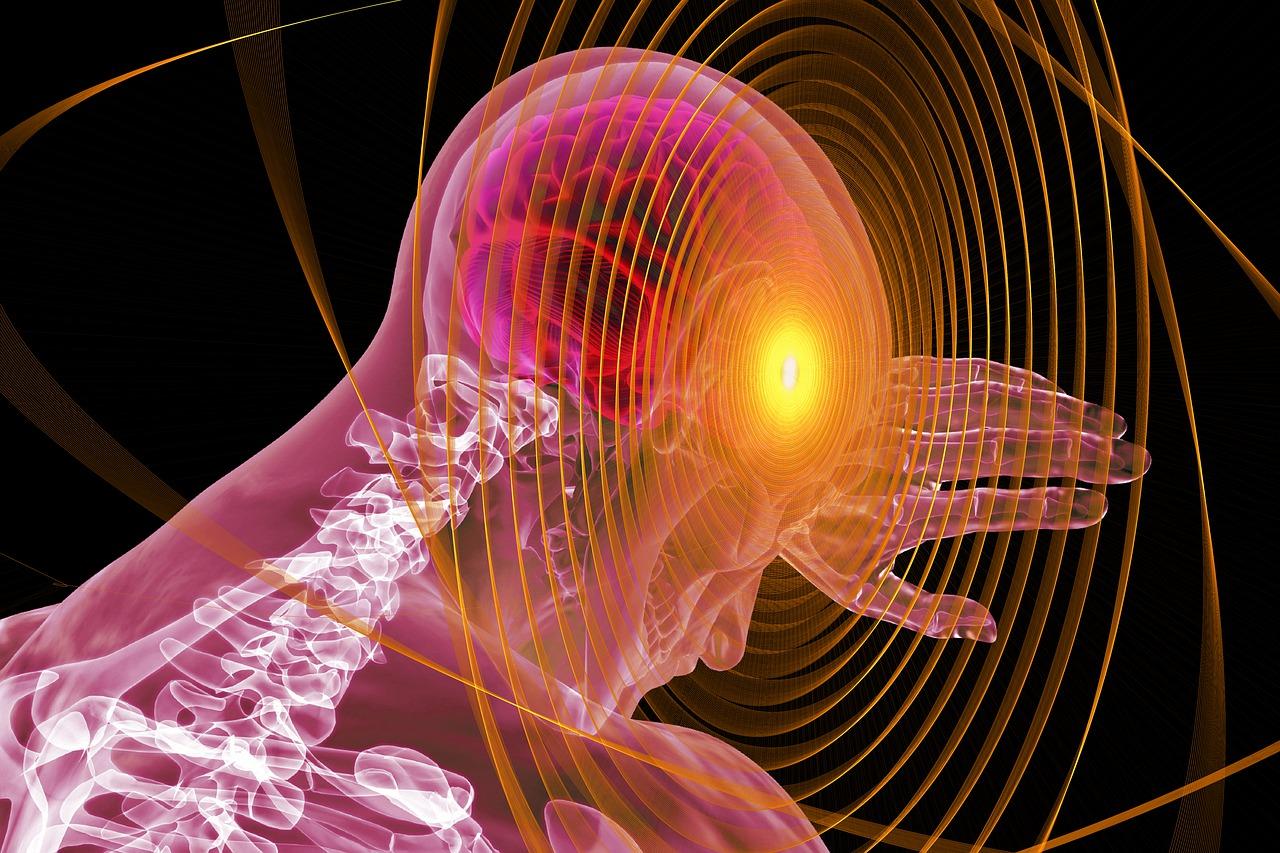 human anatomy links to article