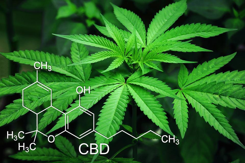 Marijuana Plant with CBD Chemical Structure Image