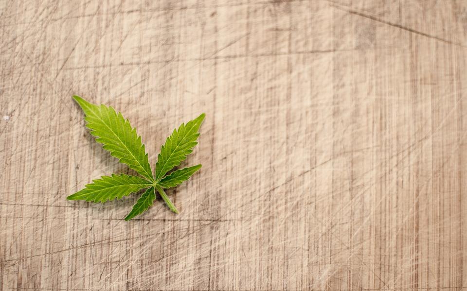 Pot Leaf Image