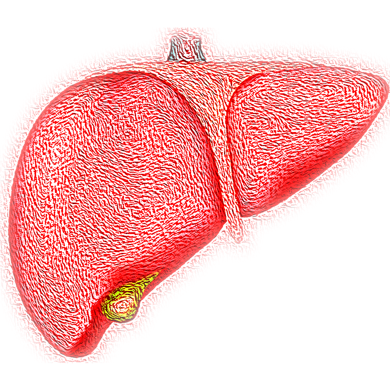 liver links to article