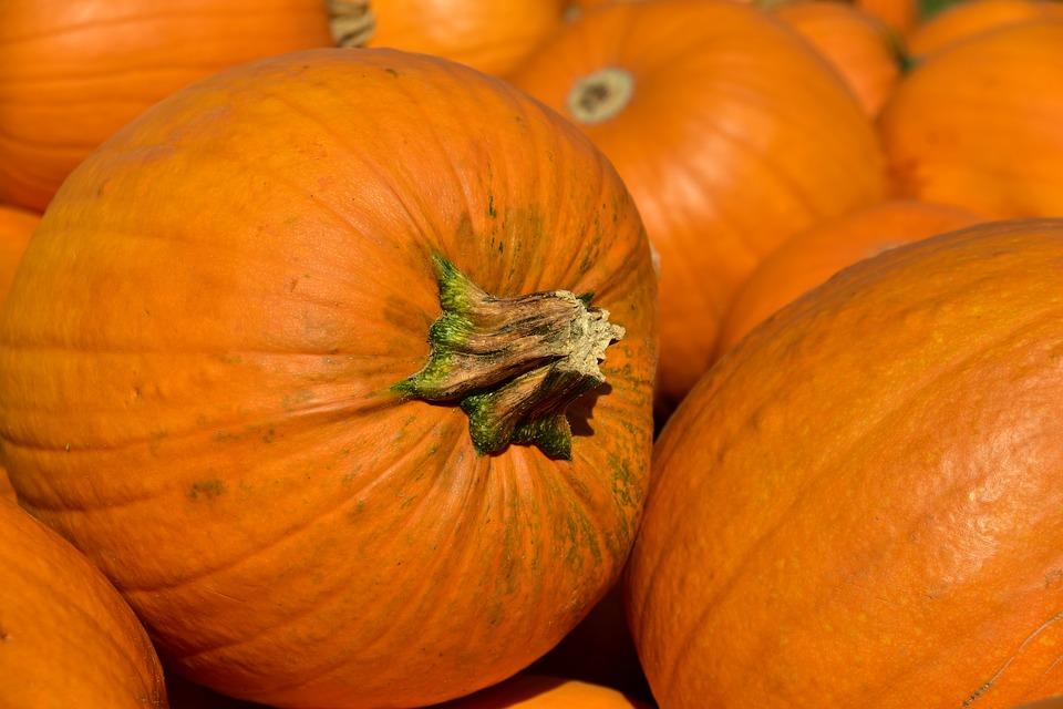 pumpkins image